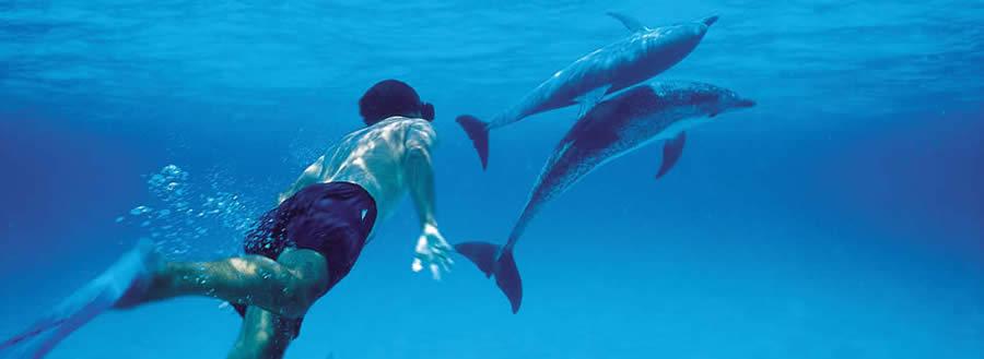 شنا با دلفینها - زنگبار
