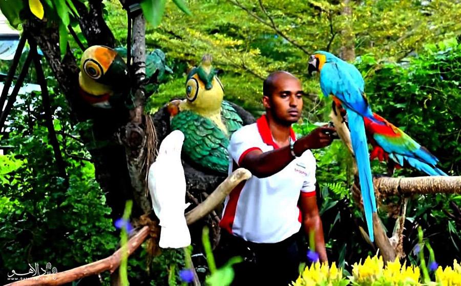 آمازون و پرندههایش