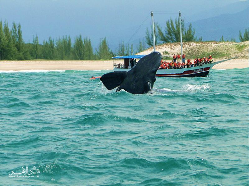 نهنگهای منطقه جنوب نزدیک ساحل پرایا دو روزا