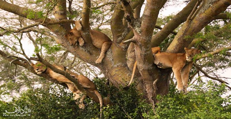 پارک ملی مانیامارا