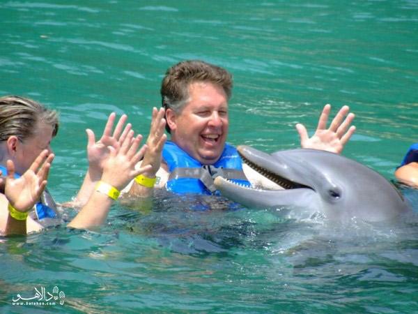 تور دلفین زنگبار
