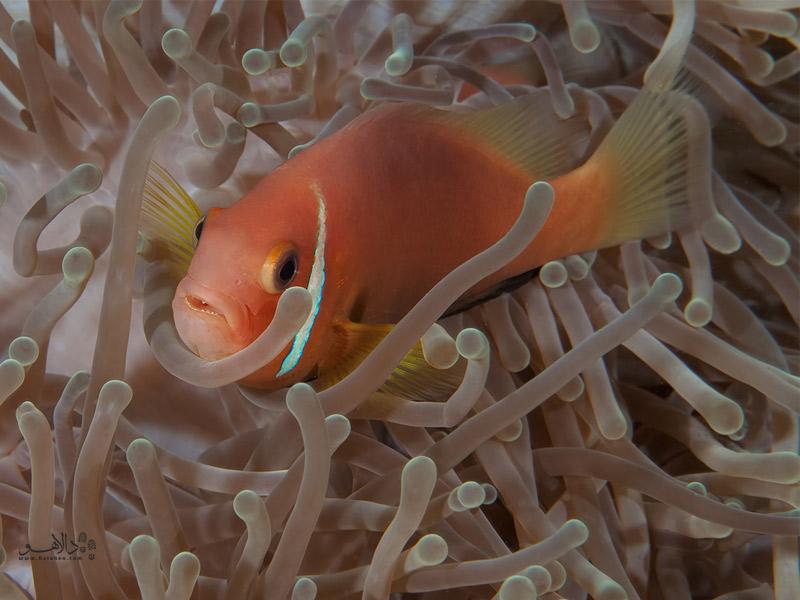 حیات زیبای زیر آب در مالدیو