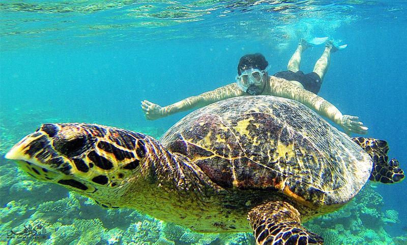 شنا در کنار لاک پشتها-مالدیو