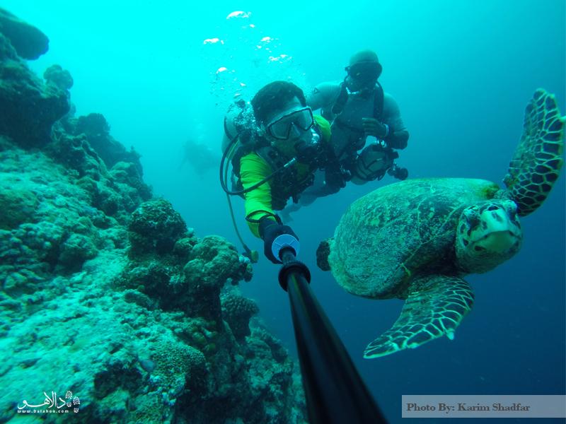 شنا با لاکپشتهای مالدیو